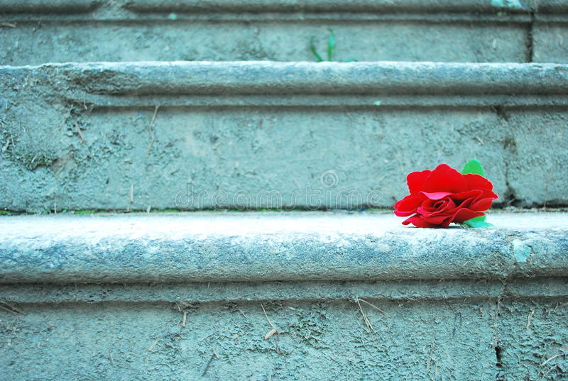 Download Red rose stairs stock image. Image of love, happens, gifts - 19391765