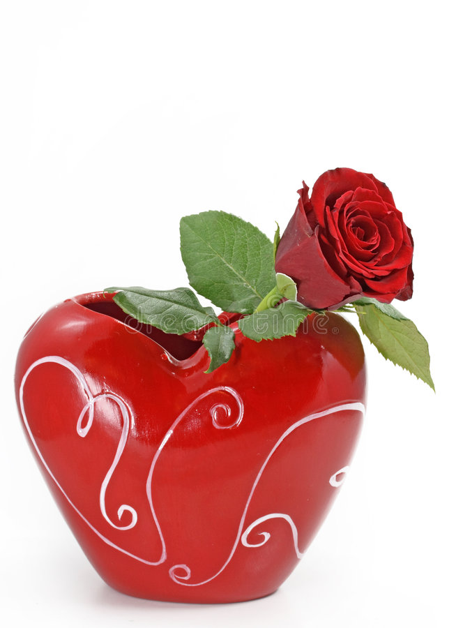 Red rose in vase. On white background stock photography