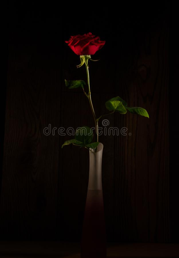 Red rose in a vase in the dark. Beautiful red rose in a vase in the dark royalty free stock photography