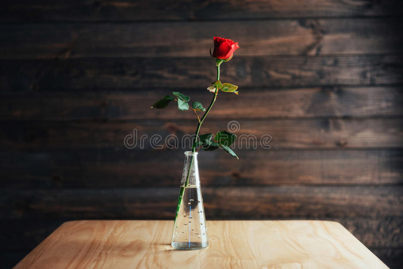 Red rose in vase on wooden table.  royalty free stock photos