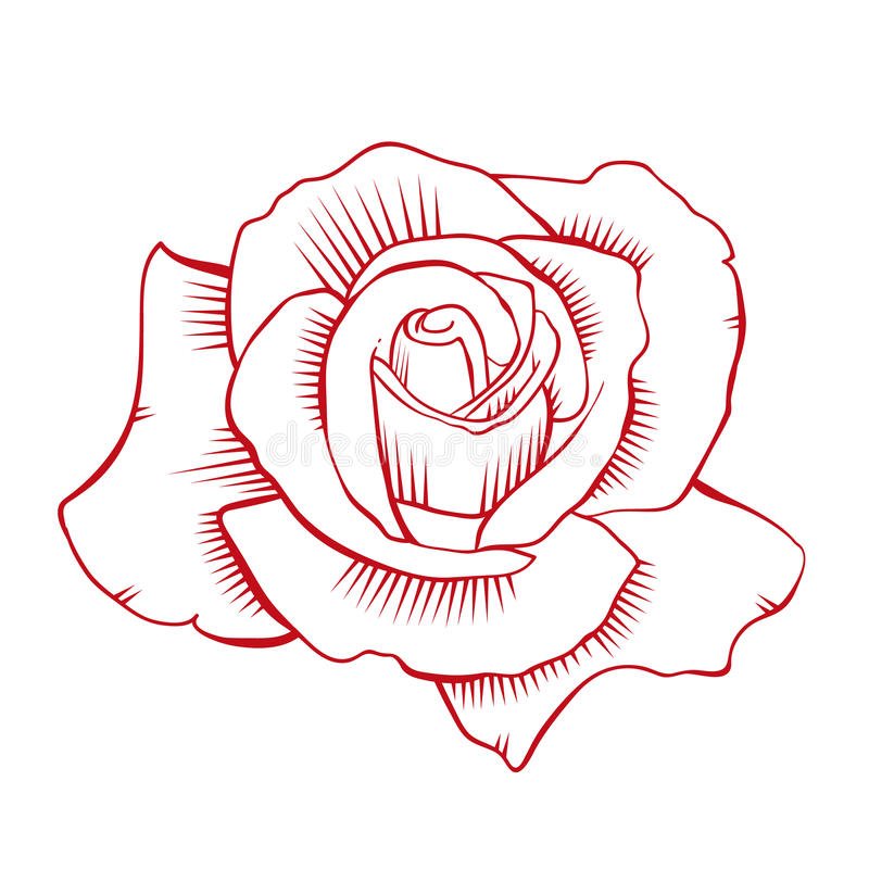 Red Rose Vector stock image