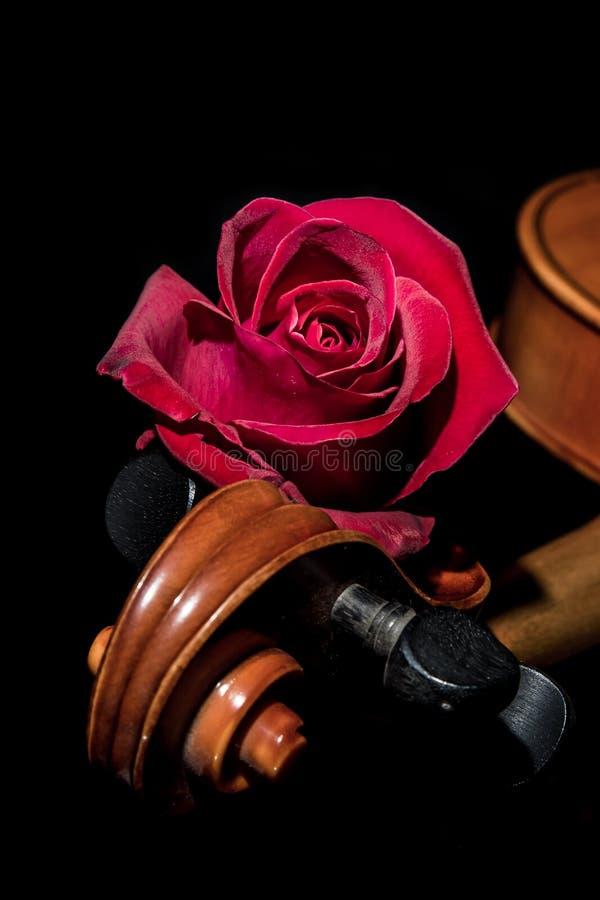 Red rose violin stock image