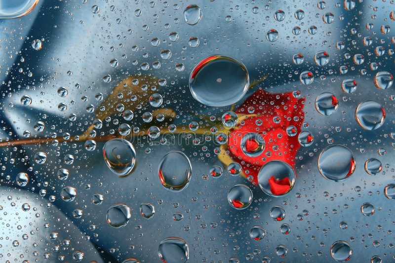 Download Red rose in water drops 6 stock photo. Image of blue, stem - 1826120