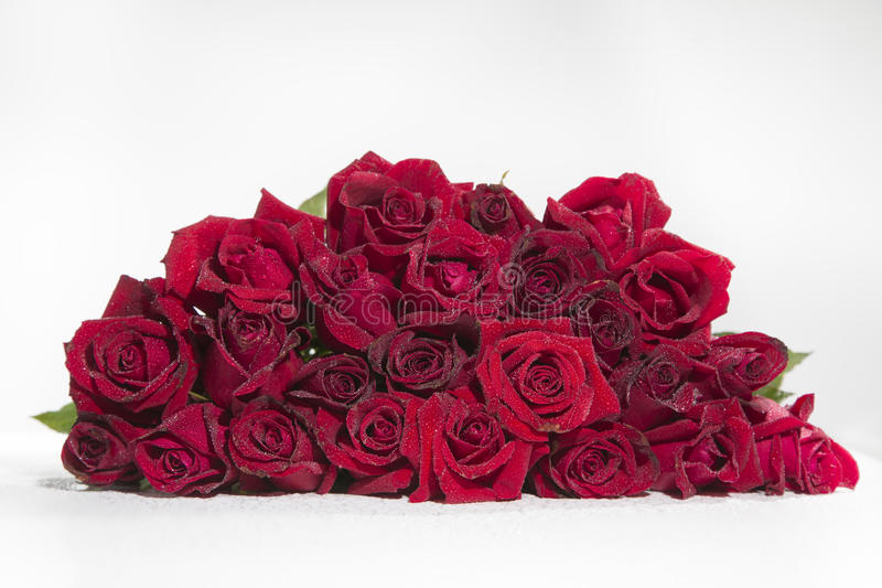Download Red rose stock photo. Image of white, texture, tender - 43529310
