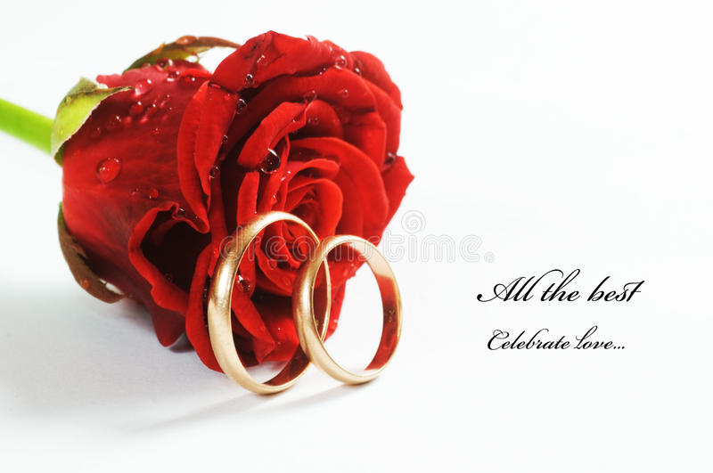 Red rose and wedding ring. Red fresh rose and gold wedding rings on white background. Space for your text stock image