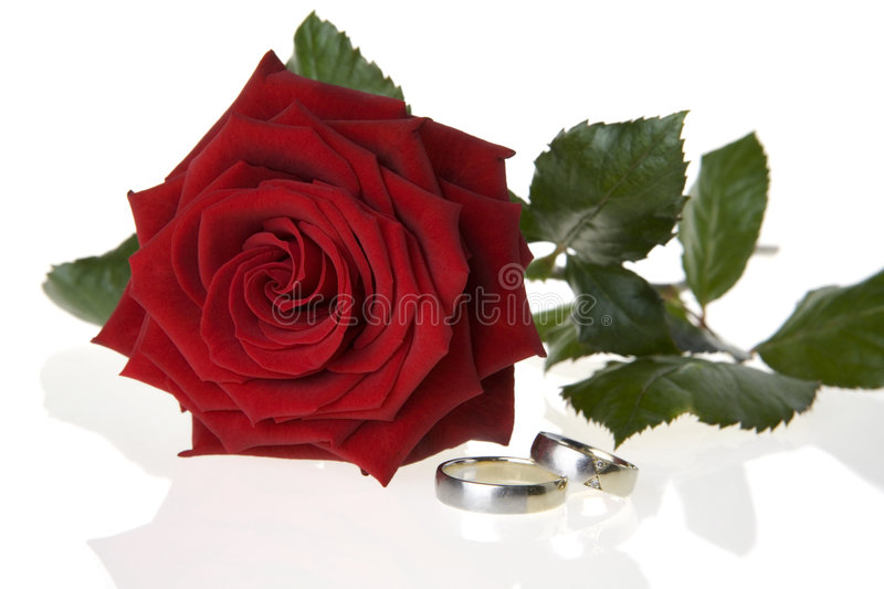 Red rose and wedding rings stock photos