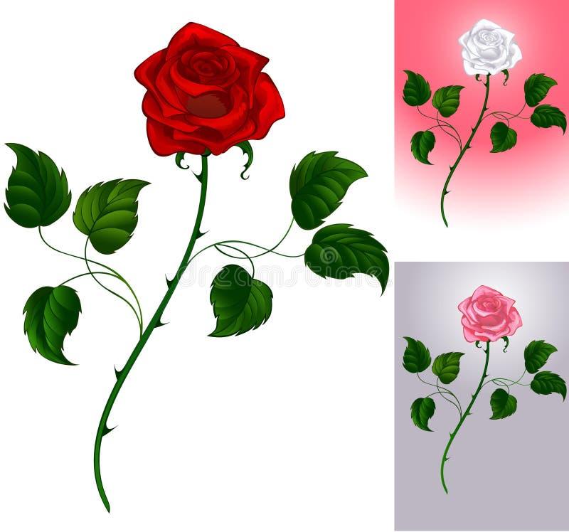 Red rose on white royalty free illustration