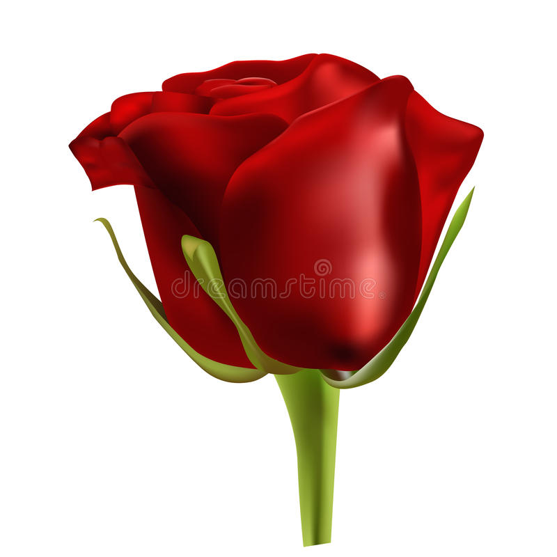 Red rose. On the white background royalty free illustration