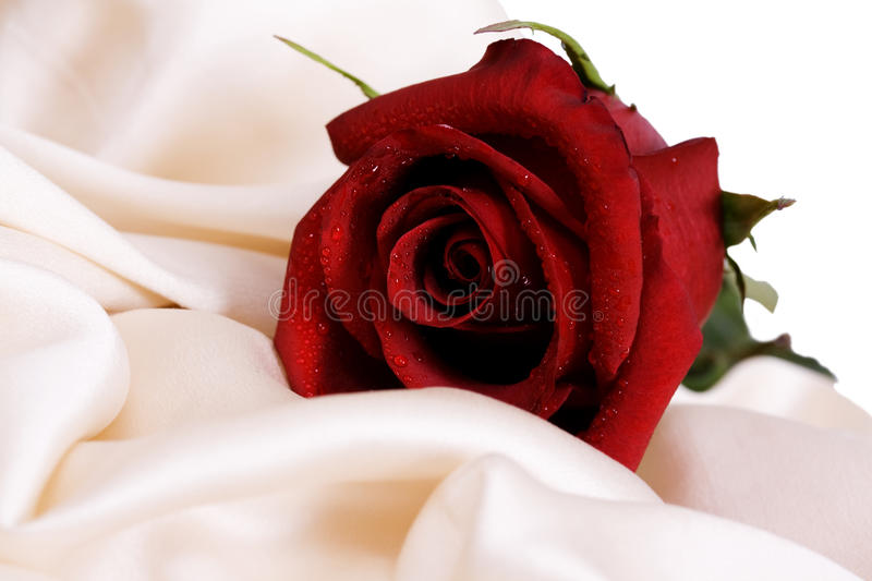 Red Rose And White Silk Stock Images