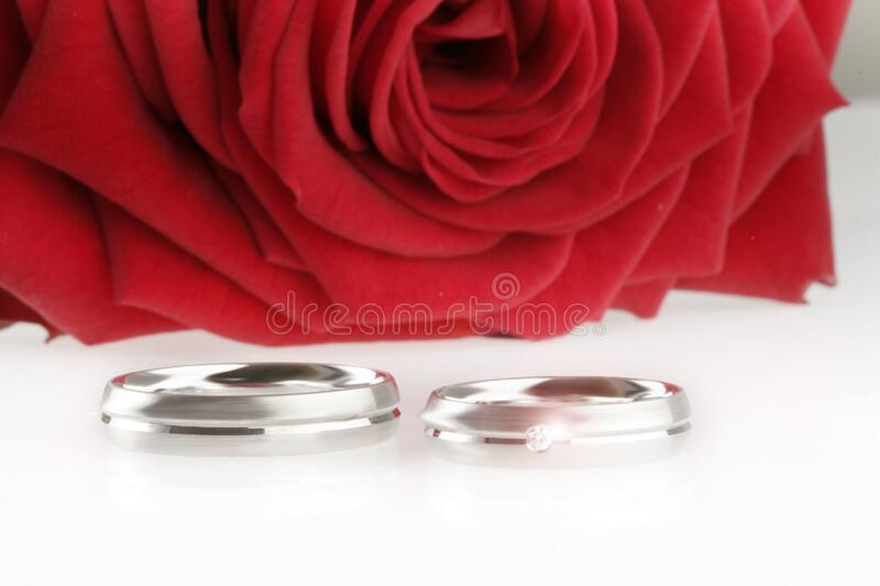Red rose on white table with two silver wedding rings, Ready to get married stock photo
