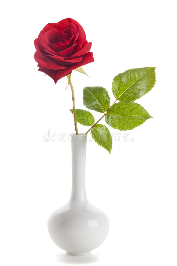 Red rose in white vase isolated. Single red rose in a vase isolated on white background stock image