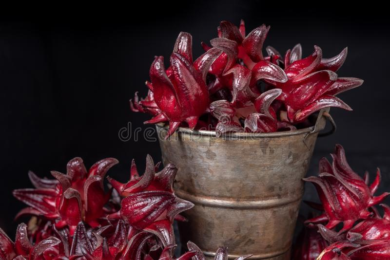 Red roselle in a pot with black background. Healthy concept royalty free stock images