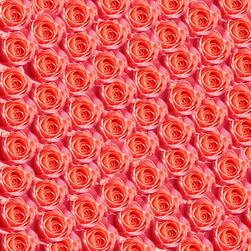 Download Red Roses stock photo. Image of flowers, repeated, rose - 107482