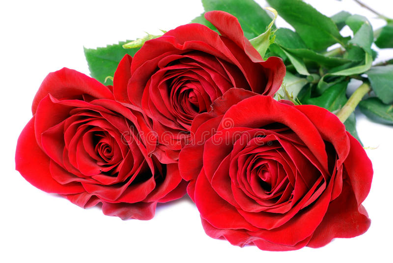 Download Red roses stock image. Image of object, isolated, bouquet - 10832445