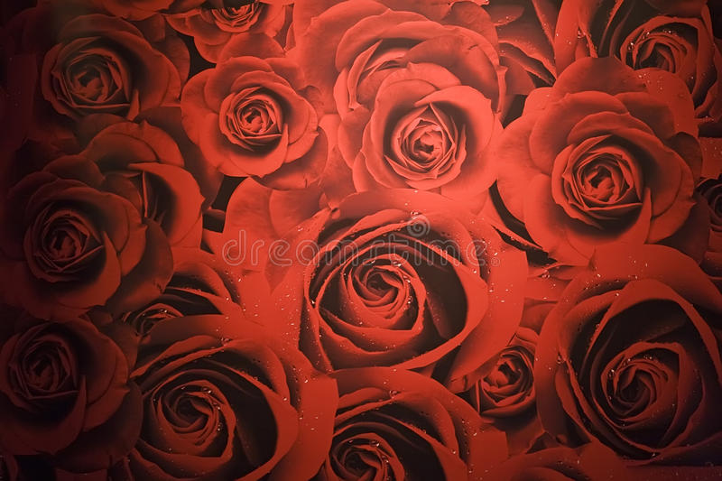 Download Red roses stock photo. Image of card, decor, celebrate - 11962146