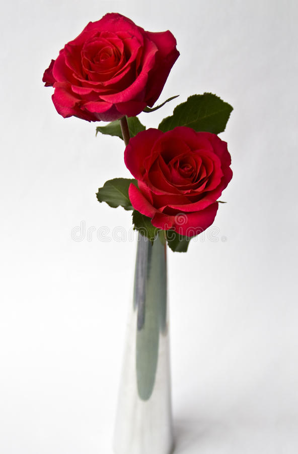 Download Red Roses Stock Image - Image: 15858481