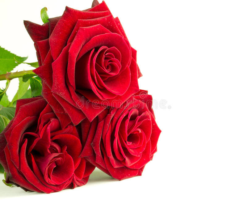 Download Red roses stock photo. Image of green, blossom, garden - 20117708