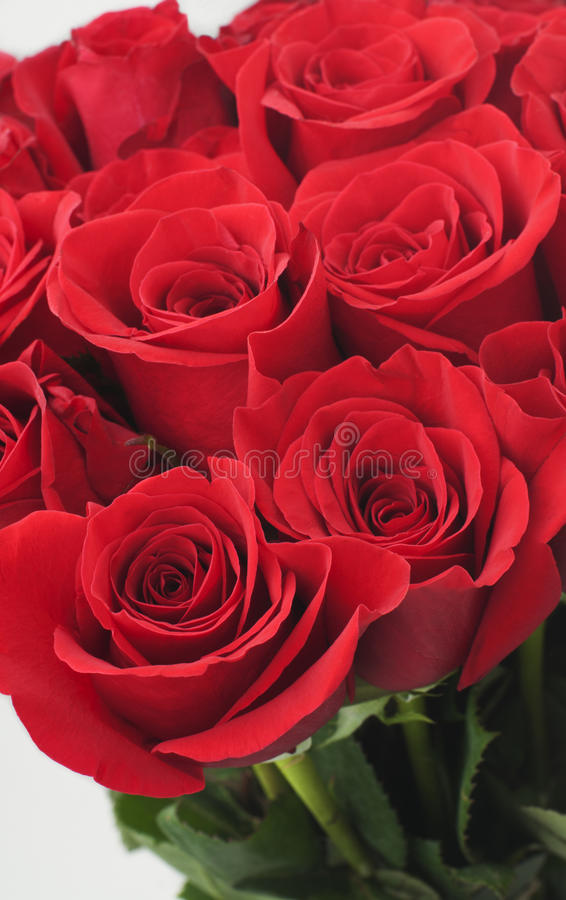 Download Red Roses stock image. Image of pattern, celebration - 20859745