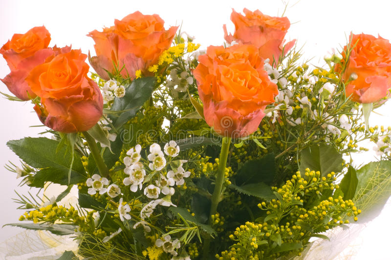 Download Red Roses stock photo. Image of dating, rose, white, wedding - 24474362