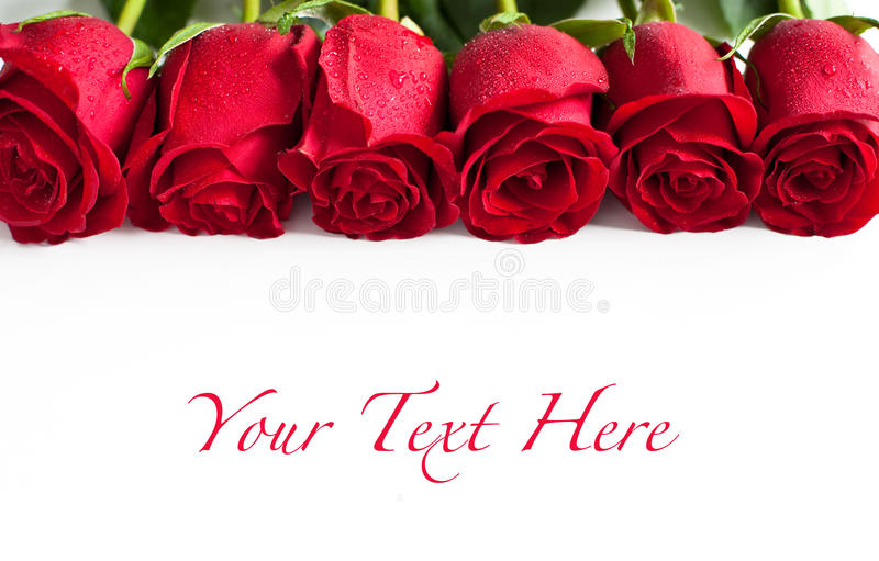 Download Red roses stock photo. Image of holiday, plant, gift - 28190782