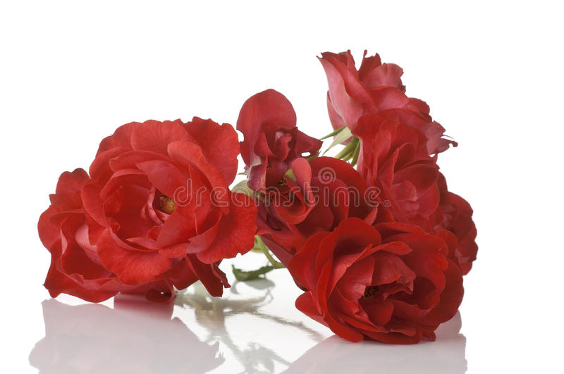 Download Red roses stock image. Image of white, flora, bunch, isolated - 28794049