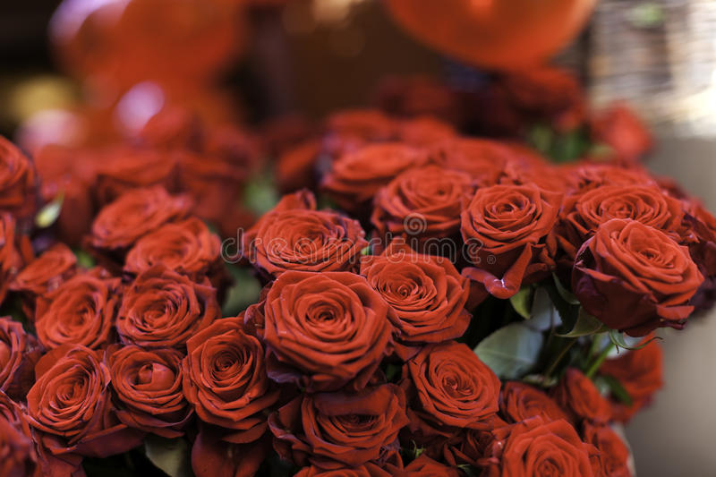 Download Red roses stock image. Image of greeting, beautiful, flower - 37856837