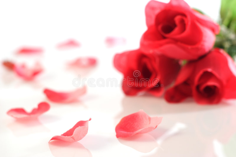 Red roses. Blurry in bachground, petals sharp in front