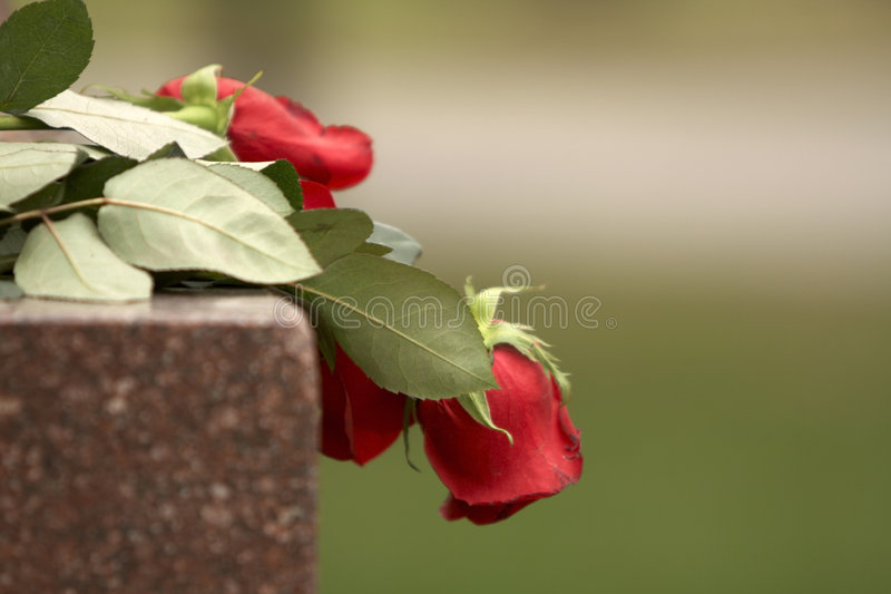Download Red roses stock photo. Image of roses, flowers, color - 4946620