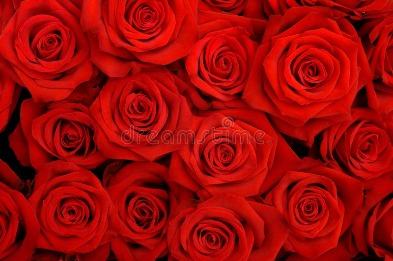 Red roses. Big bunch of red roses