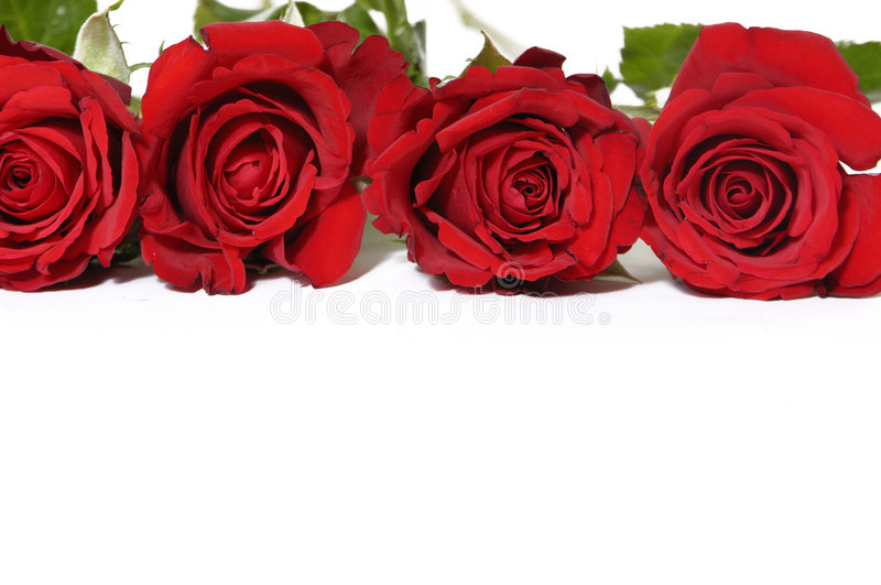 Red roses. Beautiful bouquet of red roses royalty free stock photo
