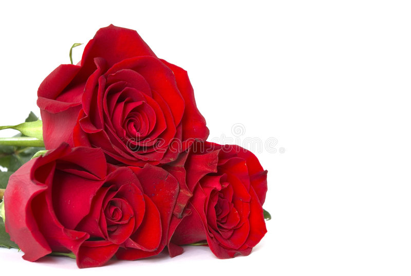 Download Red roses stock image. Image of petals, flower, macro - 7921905