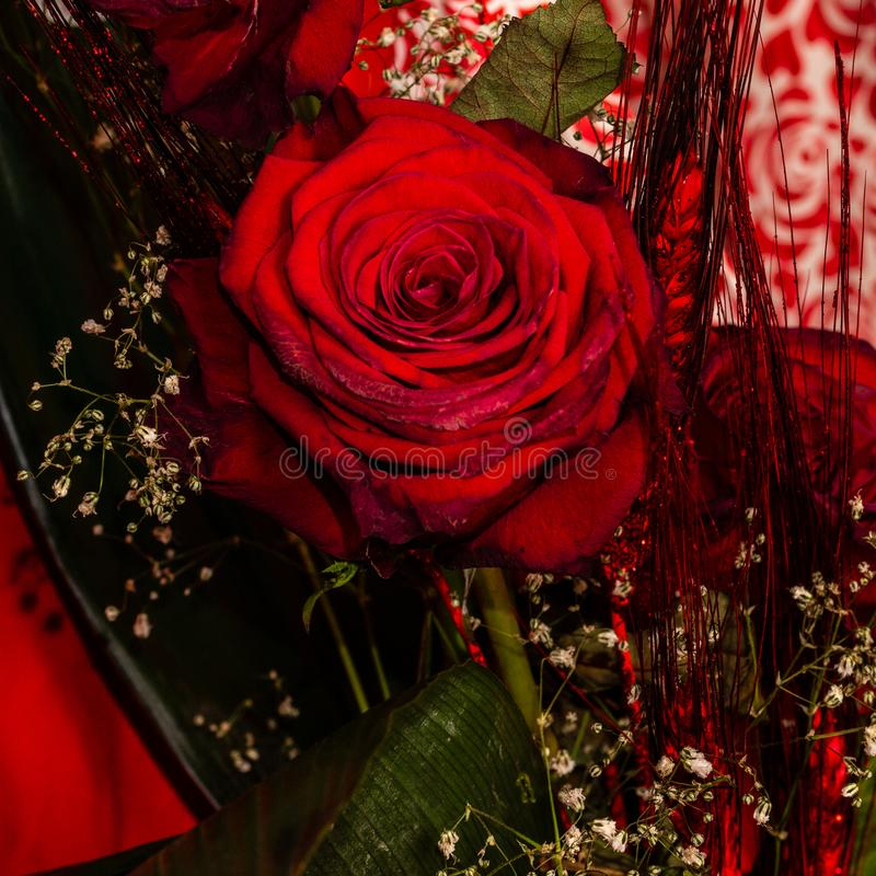 Red roses as a gift stock photo