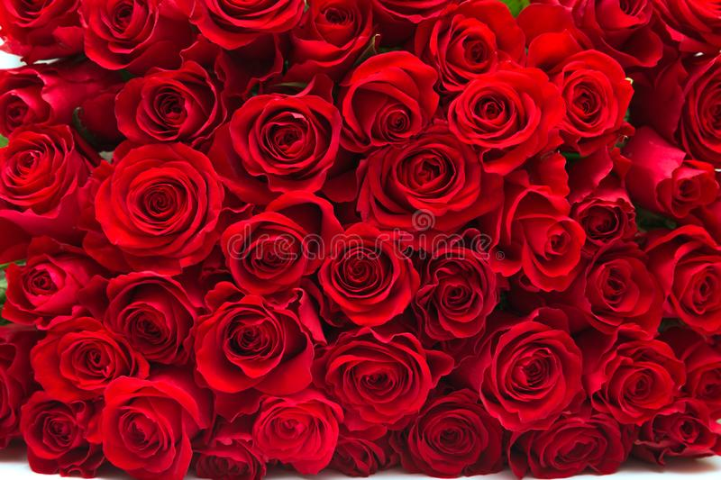 Red roses. Background of a lot of beautiful red roses stock image