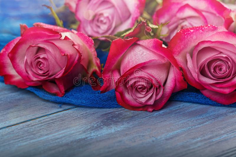 Red roses on a blue background stock photos