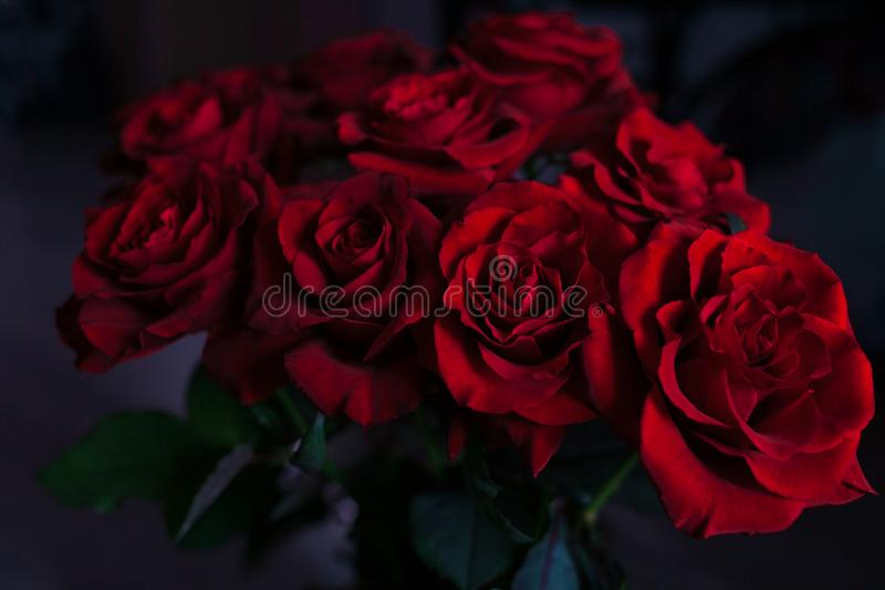 Red roses on the blurred background stock image