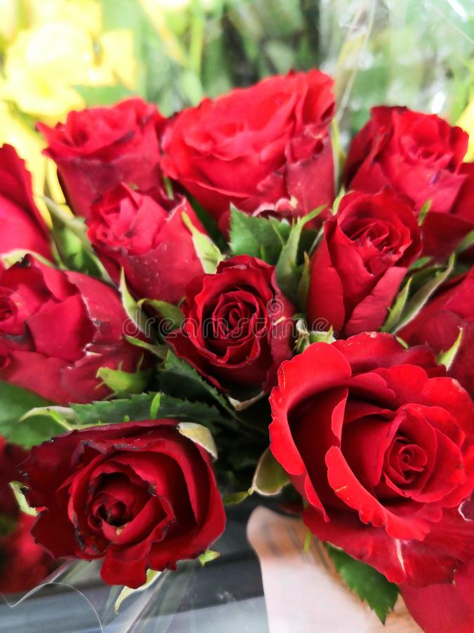Red roses. A bouqet of roses royalty free stock image