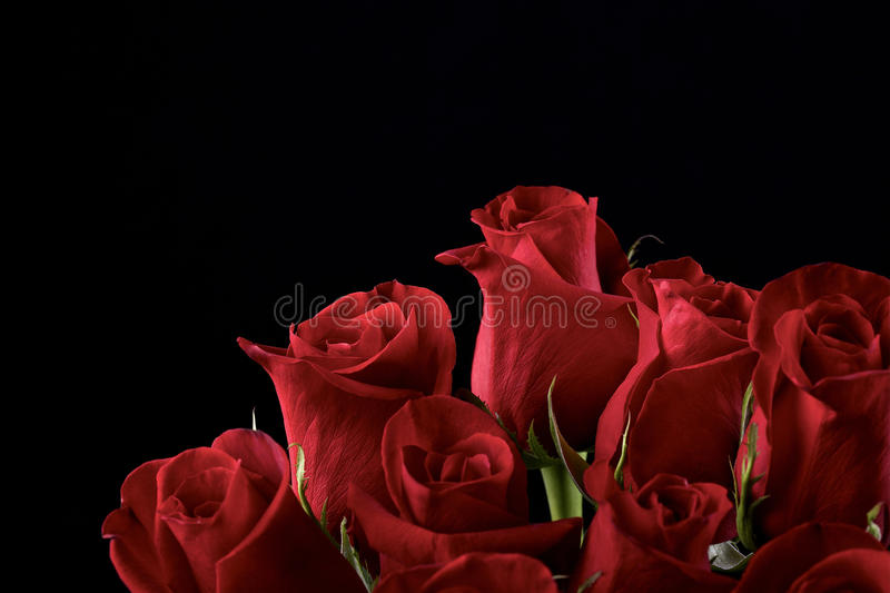 Red roses. Bouquet of red roses on black background stock photography