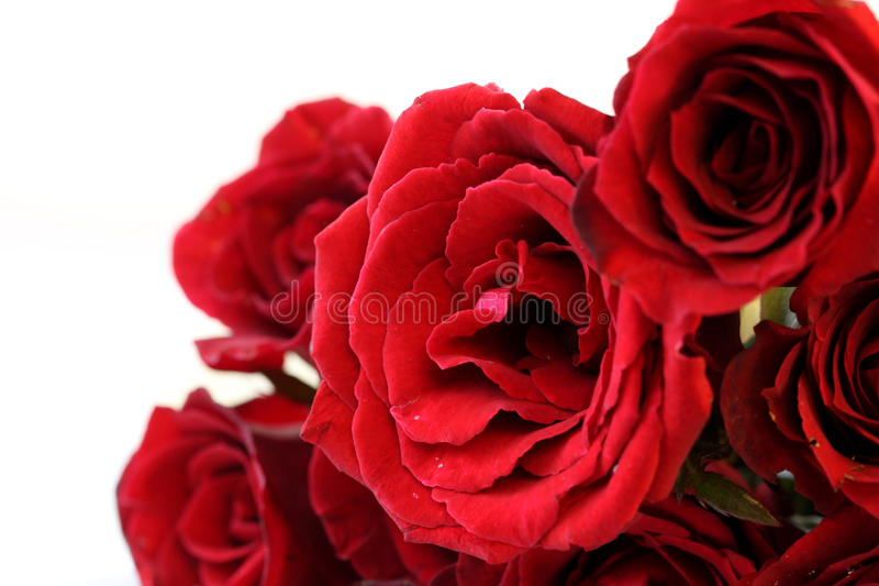 Red roses bouquet isolated on white background.  stock photo