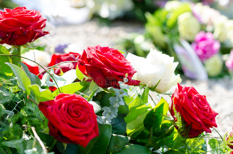 Red roses. Bouquet in sunlight royalty free stock image