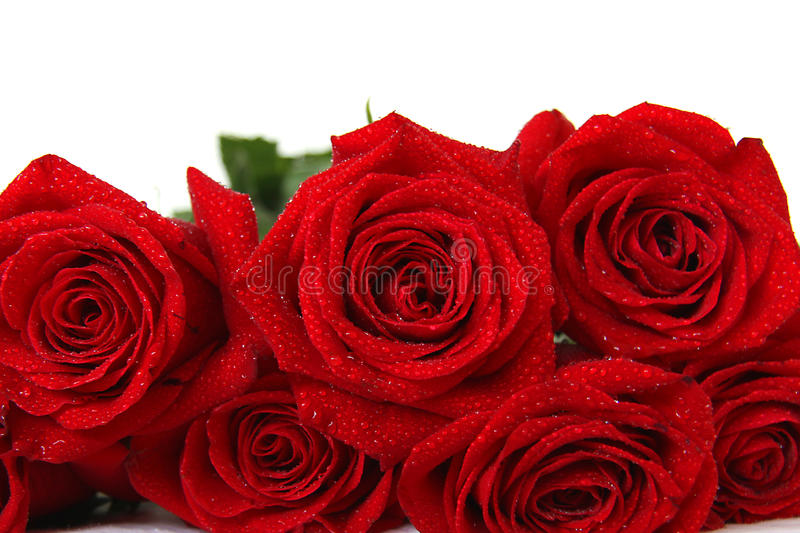 Red Roses Bouquet On White Background Royalty Free Stock Photos