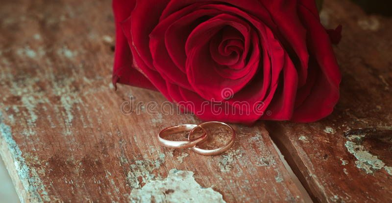 Red roses closeup stock photography