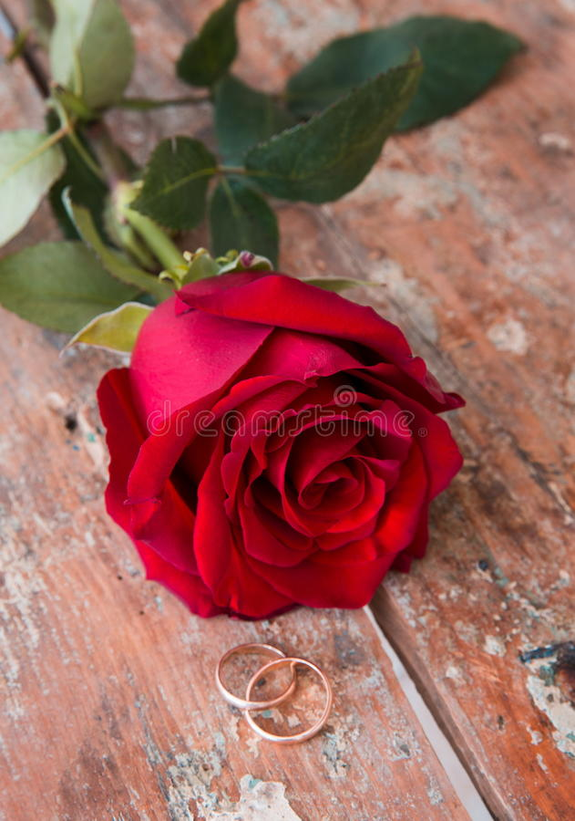 Red roses closeup stock photo