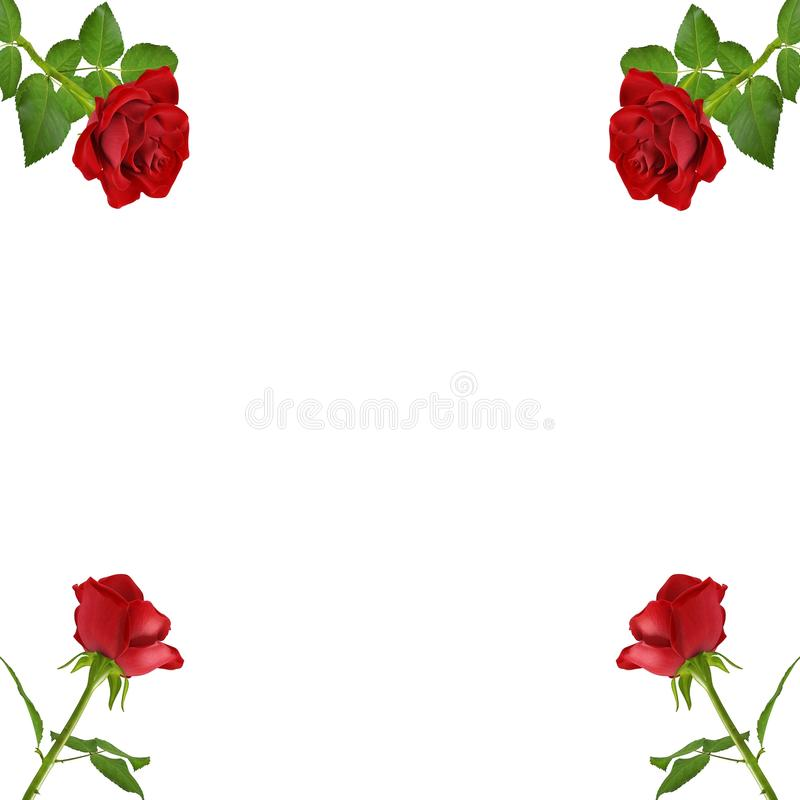 RED ROSES CORNERS BACKGROUND royalty free stock photo