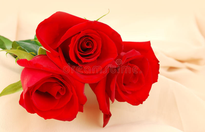 Red roses on the cream background stock photography