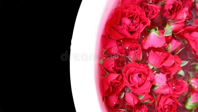 Red roses floating in white basin with black background. Season of Spring, Autumn, or Summer, love, Valentine, dating, celebrating royalty free stock photo