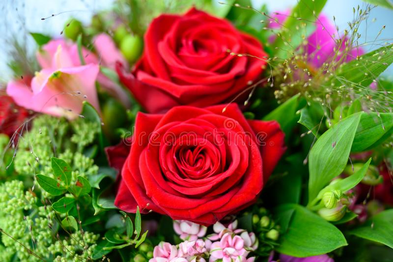 Red roses flowering summer bouquet closeup stock photography