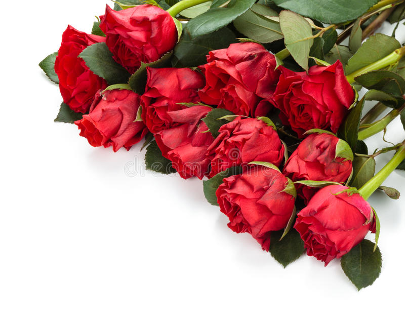 Red roses frame. Heap of red roses isolated on white background stock images