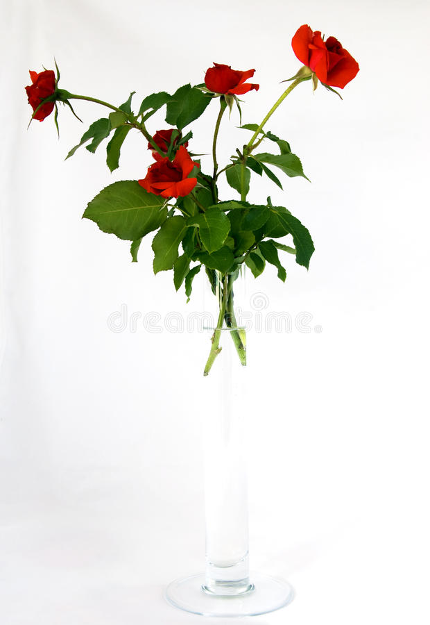Red Roses In Glass Vase Royalty Free Stock Photo