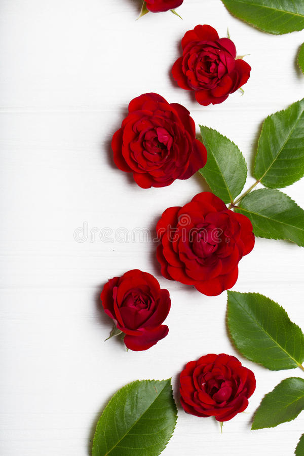 Red roses and green leaves on a white wooden table. Vintage floral pattern. View from above. Flower pattern. Empty space for text royalty free stock images