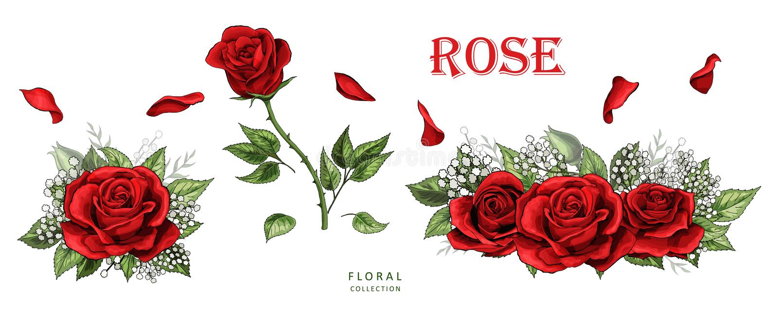 Red roses hand drawn color set. Rose flowers isolated on white background. Red roses hand drawn color set. Black line rose flowers isolated on white background royalty free illustration